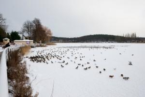 Barlinek zimą
